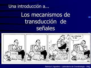 Los mecanismos de  transducción  de  señales
