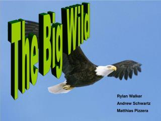 The Big Wild