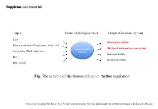 Fig.  The scheme of the human circadian rhythm regulation.