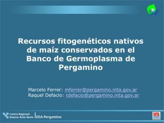 Recursos fitogenéticos nativos de maíz conservados en el Banco de Germoplasma de Pergamino