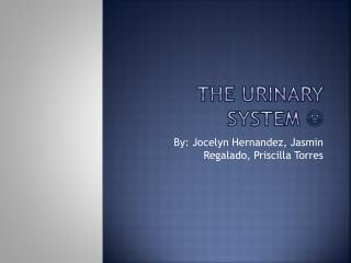 The Urinary System  ?