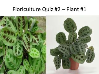 Floriculture Quiz 2   Plant 1