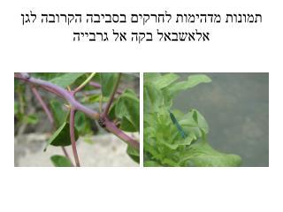 תמונות מדהימות לחרקים בסביבה הקרובה לגן  אלאשבאל בקה  אל  גרבייה