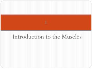 Introduction to the Muscles