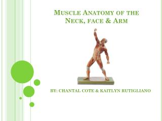 Muscle Anatomy of the Neck, face & Arm