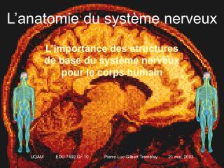 L�anatomie du syst�me nerveux