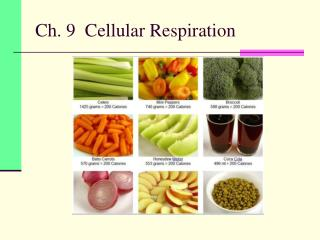 Ch. 9  Cellular Respiration