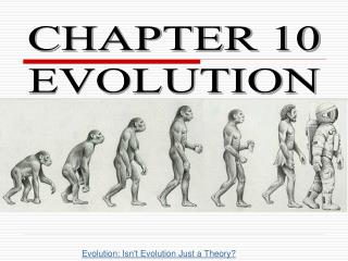 CHAPTER 10 EVOLUTION