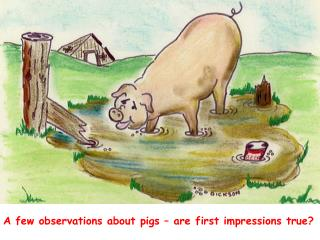 A few observations about pigs – are first impressions true?