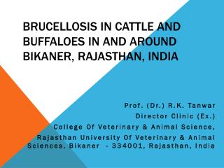 Brucellosis in Cattle and Buffaloes in and around Bikaner, Rajasthan, India