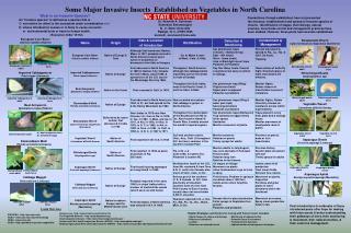 Some Major Invasive Insects  Established on Vegetables in North Carolina