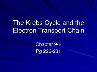 The Krebs Cycle and the Electron Transport Chain