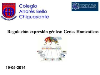 Regulaci�n expresi�n g�nica: Genes Homeoticos