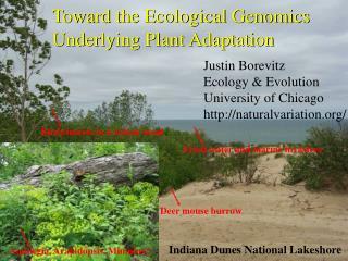 Toward the Ecological Genomics Underlying Plant Adaptation