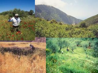 Plant Genetic Resource Gap Analysis: targeting CWR for  in situ  and  ex situ  conservation
