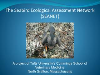 The Seabird Ecological Assessment Network (SEANET)