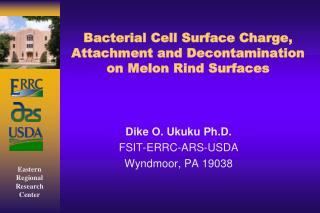 Bacterial Cell Surface Charge, Attachment and Decontamination on Melon Rind Surfaces