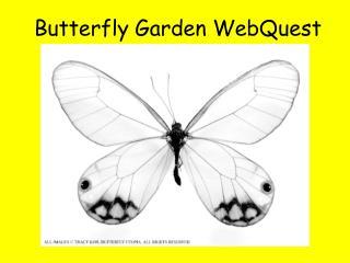 Butterfly Garden WebQuest