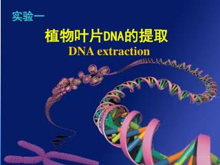 植物叶片 DNA 的提取 DNA extraction