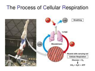 T he  P rocess of  C ellular  R espiration
