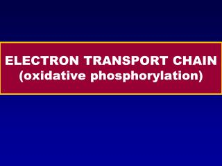 ELECTRON TRANSPORT CHAIN (oxidative phosphorylation)