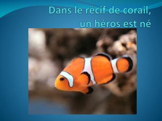 Dans le  récif  de  corail ,  un  héros est né