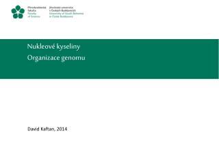 Nukleové kyseliny Organizace genomu