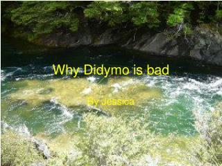 Why Didymo is bad