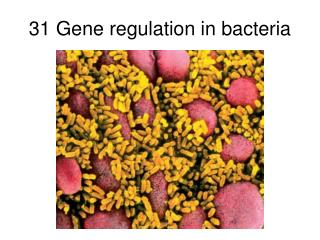 31 Gene regulation in bacteria