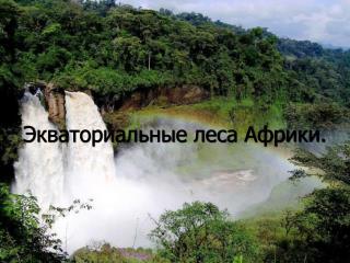 Экваториальные леса Африки.