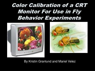 Color Calibration of a CRT Monitor For Use in Fly Behavior Experiments