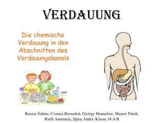 Die chemische Verdauung in den Abschnitten des Verdauungskanals