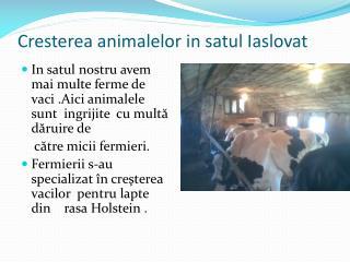 Cresterea animalelor in satul Iaslovat