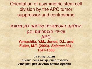 Yamashita, Y.M., Jones, D.L. and Fuller, M.T. (2003).  Science  301, 1547-1550