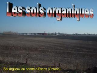 Les sols organiques