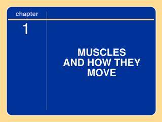MUSCLES  AND HOW THEY MOVE