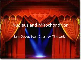Nucleus and Mitochondrion