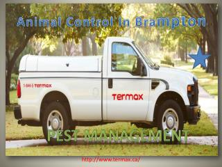 Wildlife Animal Control & Pest Management ? Toronto, Brampto
