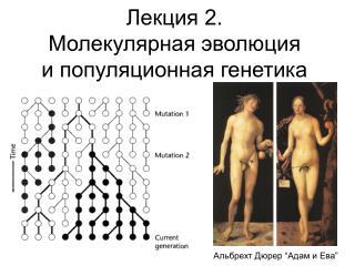 Лекция 2. Молекулярная эволюция и популяционная генетика