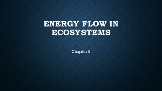 Chapter 5  THE FLOW OF ENERGY WITHIN ORGANISMS