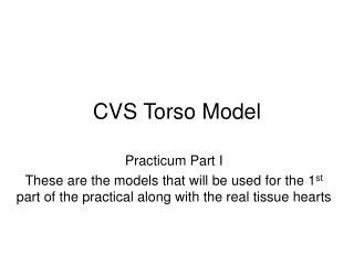 CVS Torso Model