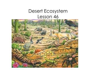 PPT - Desert Ecosystem Lesson 46 PowerPoint Presentation - ID:5962596