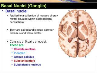 Basal Nuclei (Ganglia)
