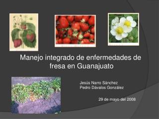 Manejo integrado de enfermedades de   fresa en Guanajuato