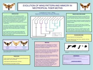 EVOLUTION OF WING PATTERN AND MIMICRY IN  NEOTROPICAL TIGER MOTHS