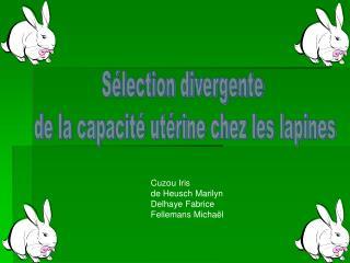 Sélection divergente  de la capacité utérine chez les lapines