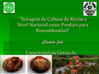 """""""Testagem da Cultura do Rícino a Nível Nacional como Produto para Biocombustível"""" Cândido João"""