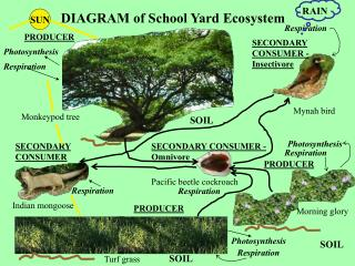 DIAGRAM of School Yard Ecosystem