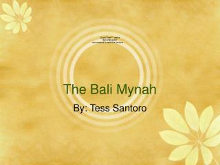 The Bali Mynah