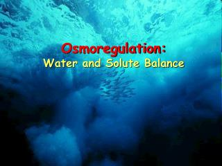 Osmoregulation: Water and Solute Balance